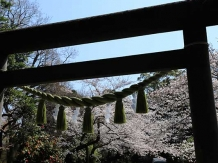 Kamakura Genjiyama Koen_2018-03-28_Hiroyoshi Kawana