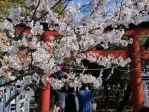 Kamakura hataagebenzaiten_2018-03-28_Hiroyoshi Kawana
