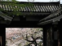 Tokyo Chidorigafuchi_2018-03-29_Hiroyoshi Kawana