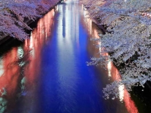 Tokyo Megurogawa River_2017-04-07_Hiroyoshi Kawana