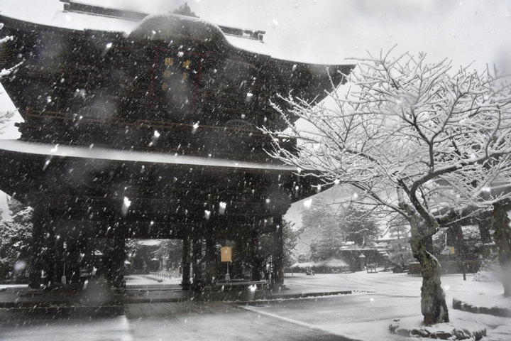 Snow in Kamakura