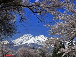 overlook Mt Myoko from the Sakura picture frame