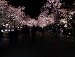 Sakura Road in the evening
