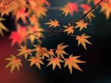 Couleurs des feuilles l'automne