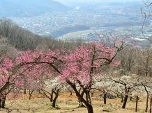 Nagatoro town, Saitama, mid March Mr Goro Abe