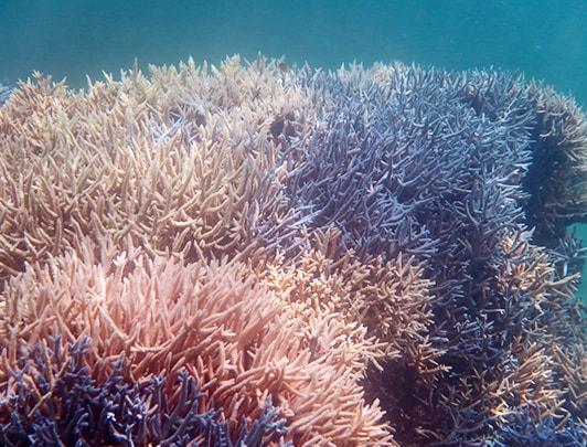 Monde sous marin à Ishigaki