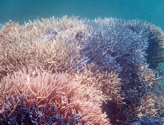 Undersea world at Ishigaki island