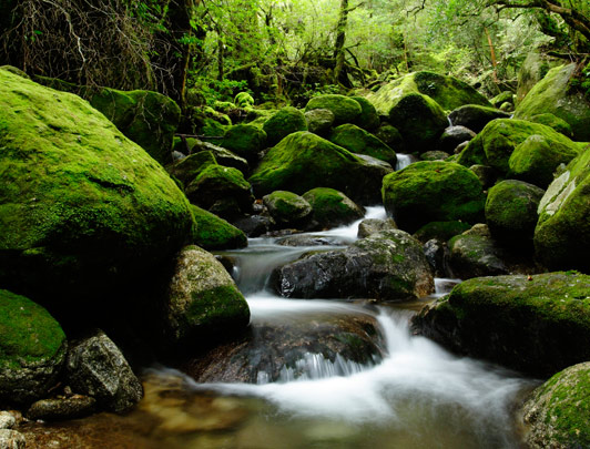 Hidden Japan: Discover Kyushu (via Yakushima)