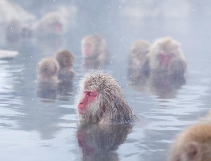 Jigokudani Yaen Koen (Parco delle scimmie selvatiche delle nevi)