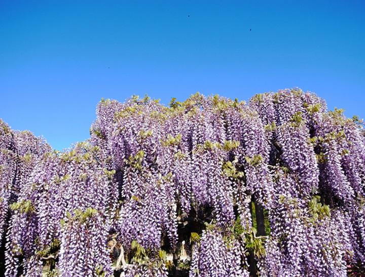 Le Parc Floral d'Ashikaga