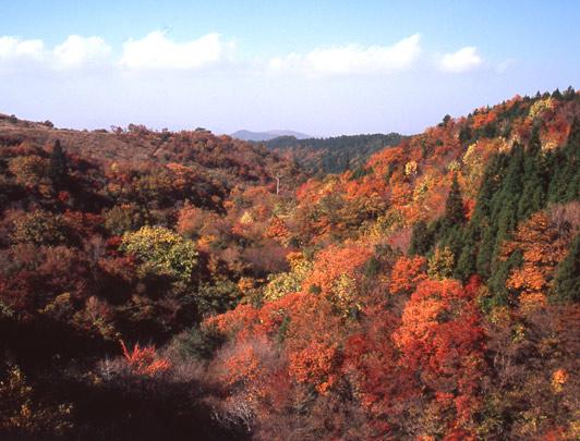 Kyusuikei, Kokonoe, Oita