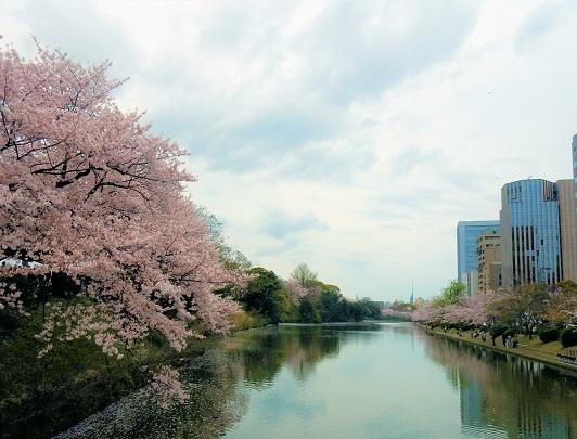 Sakura_Maizuru Park_Fukuoka