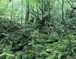 The craggy peaks and ancient forests of Yakushima, and a side trip to Tanegashima