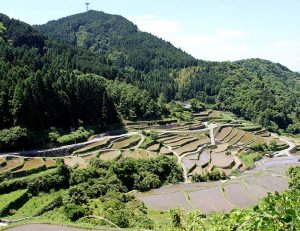 Traditional rice planting | Ukiha City Fukuoka | Japan