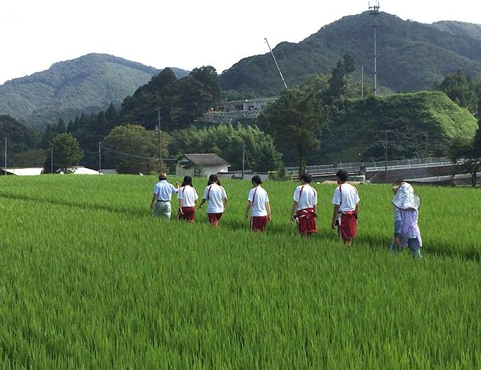 Mise au vert dans la campagne japonaise