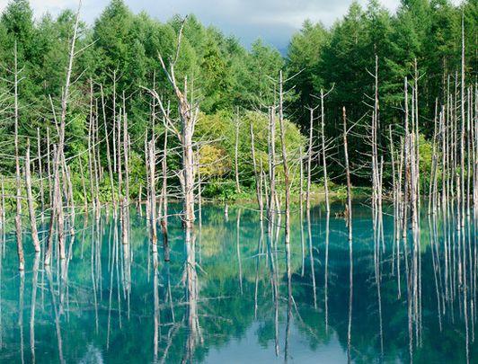 Charme estival au cœur d'Hokkaido: des Forêts aux Sommets