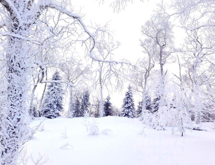 Escapade hivernale en contrée sapporaise : plus de 5 activités pour vous défouler dans la neige !