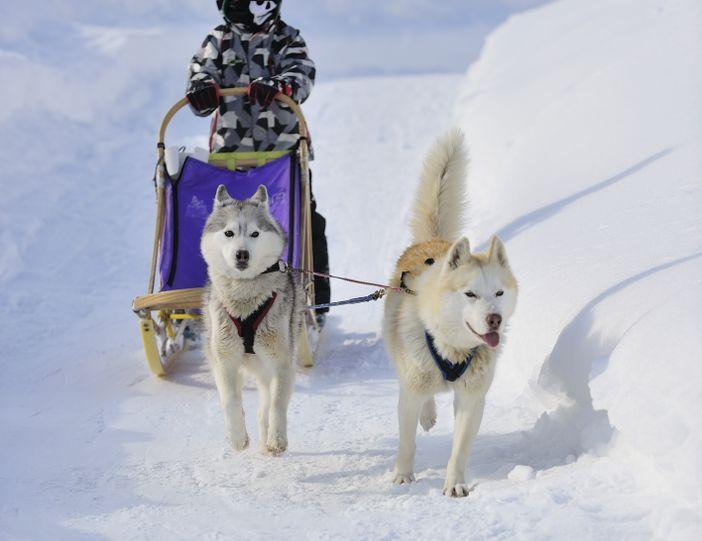 japon sapporo blog hiver traineau