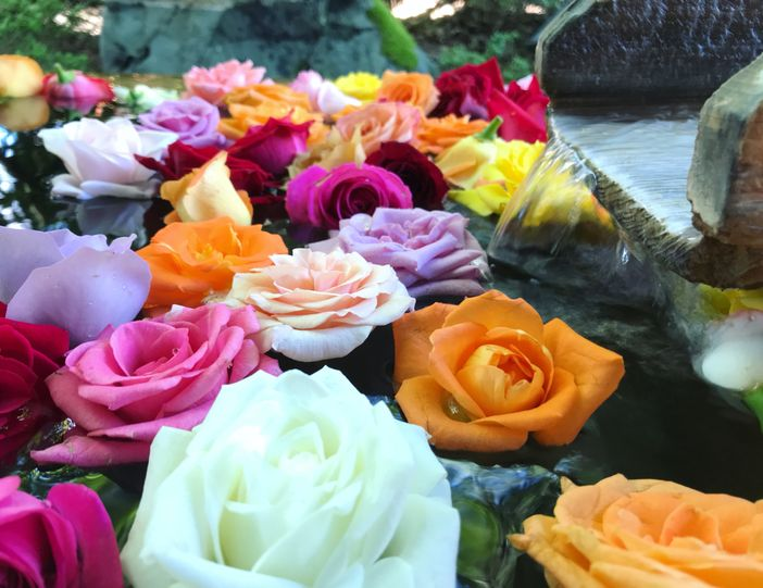 bain de rose onsen japon misasa tottori