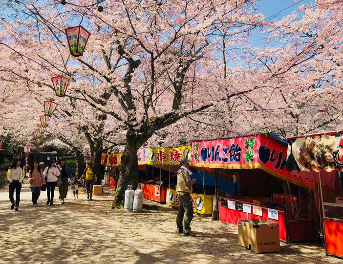 printemps kurayoshi japon sakura