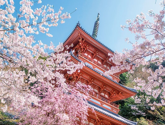 Cherry Blossom & Culinary Experience in Kyushu 2019
