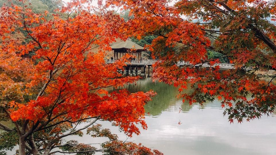 nara pavillon automne alice