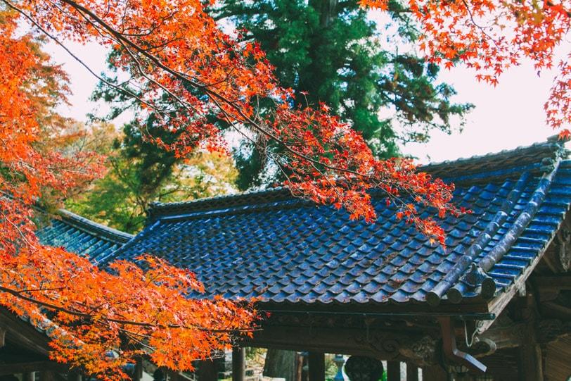 alice duporge japon-9735IMG_9735-min