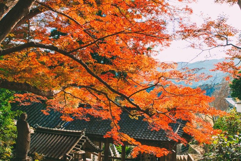 alice duporge japon-9747IMG_9747-min
