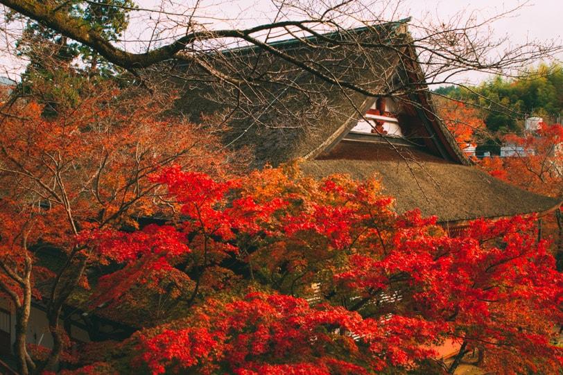 alice duporge japon-9843IMG_9843-min
