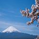 Nous avons passé un séjour intense, inoubliable et garderons longtemps en mémoire l'accueil et la gentillesse des Japonais, la beauté des paysages, des parcs et des temples. Notre court séjour au temple bouddhiste du Mont Shigi et la promenade en vélo (avec assistance électrique) avec notre guide local dans les environs d'Asuka ont été de très belles expériences.