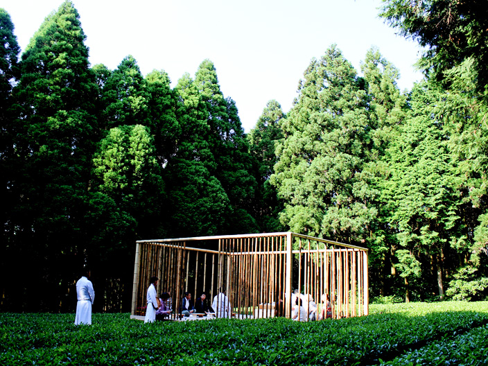 tea arbor in the forest