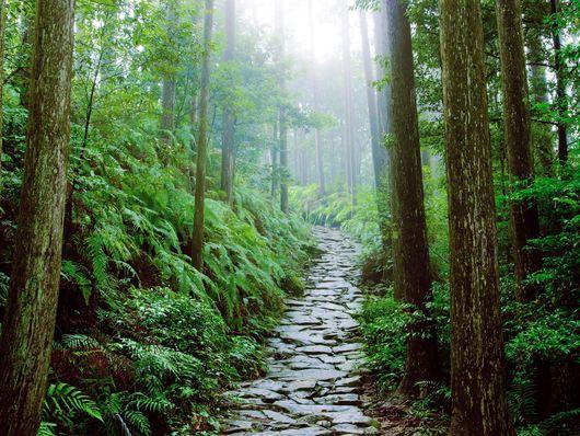 Ise et Kumano Kodo : Japon sacré et spirituel