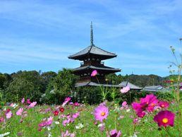 Horyuji, Nara