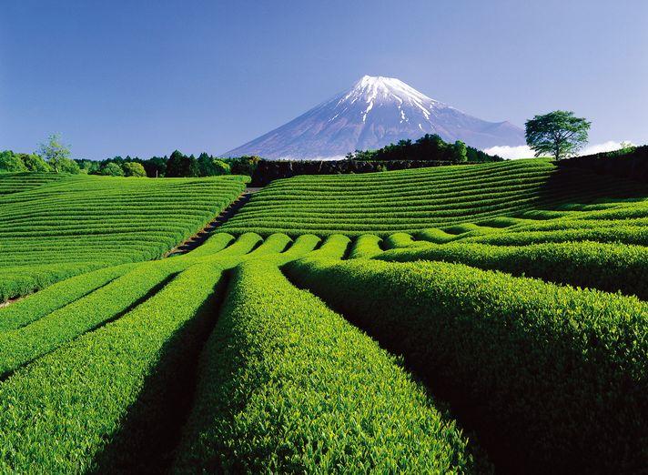 Shizuoka, le mont Fuji hors des sentiers battus